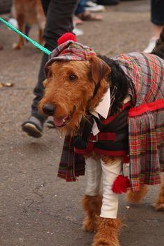 Highland Dog :) http://ww.pindoggy.com