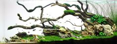 2013 AGA Aquascaping Contest - Entry #224