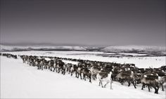 THE LONG JOURNEY HOME : LAPLAND by Gary Latham, via Behance