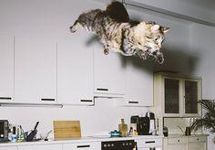 """Daniel Gebhart, fotógrafo de Viena, na Áustria, criou um projeto fotográfico divertidíssimo. É o Jumping Cats, que reúne um total de 12 fotografias de gatos """"no ar"""". Nas imagens, Ume, Elli, Flitzie, Nevio e Fifty aparecem voando (ou pulando) em diversos cômodos de apartamentos retrô que compõe perfeitamente com a cena cômica e um tanto quanto surreal. """"Eu passei várias semanas e até meses com os gatos até que eles começaram a confiar em mim e finalmente se soltaram"""", disse Daniel. """"Então…"""