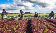 Fall in seasonal EU workers is main fear at first immigration inquiry hearing  Partly this was the result of the devaluation of sterling, partly the uncertainty over EU workers' longer-term right to work in the UK, but it was also the consequence of reports of violence and anecdotal evidence of hate crime, Dixon said. Potential ...   #UnitedSolicitors #Immigration