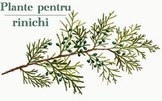 Plant Leaves, Cancer, Health, Medicine, Diet, Plant, Health Care, Salud