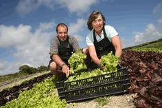 Tips for Starting a Box Scheme Vegetable Boxes, Organic Vegetables, Farmer, Tips, Food, Essen, Farmers, Meals, Yemek