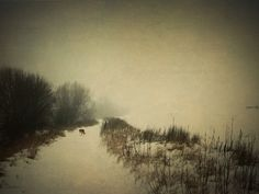 midwinter with a little friend by Cate ..., via Flickr