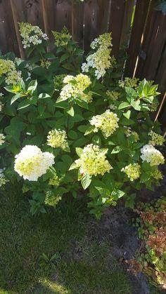 Ze staan er weer mooi bij Plants, Plant, Planting, Planets