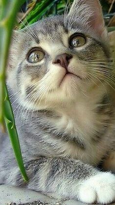 Cute cats HQ - Pictures of cute cats and kittens Free pictures of funny cats and photo of cute kittens Pretty Cats, Beautiful Cats, Animals Beautiful, Pretty Kitty, Simply Beautiful, Cute Baby Animals, Animals And Pets, Funny Animals, Funny Cats