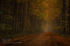 Fall has come by KW-Foto. Please Like http://fb.me/go4photos and Follow @go4fotos Thank You. :-)