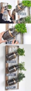 :: Mason Jar Herb Garden Live in an apartment? You can have an herb garden, too. Use mason jars and a wooden board on a spare kitchen wall.Live in an apartment? You can have an herb garden, too. Use mason jars and a wooden board on a spare kitchen wall. Mason Jar Projects, Mason Jar Crafts, Mason Jar Diy, Diy Projects, House Projects, Paint Mason Jars, Pickle Jar Crafts, Pickle Jars, Weekend Projects