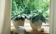 Suculentas - Dicas de como plantar - Revista Westwing