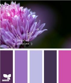 purple palette