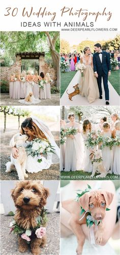 30 Wedding Photography Ideas with Animals that Will Make You Go Awwwwww! Wedding photography ideas with animals, pets, dogs Dog Wedding, Free Wedding, Wedding Trends, Wedding Pictures, Wedding Ceremony, Woodland Wedding, Perfect Wedding, Wedding Stuff, Wedding Photography Styles
