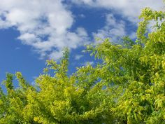 trees and sky..my tree, our sky..