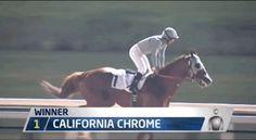 """railbird: """" California Chrome wins his 2016 Dubai World Cup prep. """""""