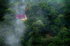 As mais belas casas na floresta 19