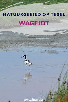 Wagejot bestaat voornamelijk uit drassige grond en brakke waterplassen. Langs de waddendijk liggen plasdrasgebieden waar je vanaf de weg heel goed vogels kan spotten. Wil je meer weten over Wagejot, lees dan mijn website. Lees je mee? #wagejot #texel #wandelen #waddeneiland #nederland #natuurgebied #jtravel #jtravelblog