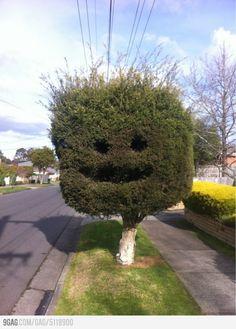 Happy tree is happy