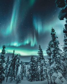 the Best place to spot The Northern Lights Some of world's best Northern Lights can be spotted in Finnish Lapland. The Aurora Borealis – as they are also called – can appear more than 200 nights a year. That's pretty much every winter night. Aurora Borealis, Design Despace, Northen Lights, Good Vibe, All The Bright Places, See The Northern Lights, Northern Lights Canada, Northern Lights Wallpaper, Northwest Territories