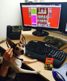 Dog at the office