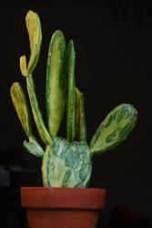 Opuntia cochenillifera variegata (Avant Gardens)