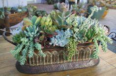 Stunning succulent arrangement from Simply Succulents