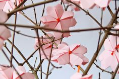 Kirschblüten-Hanami 2015