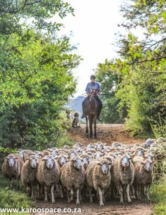Mount Melsetter is a leading Karoo farmstay near Middelburg, Eastern Cape, with sheep, wildlife and sweeping views. Other Countries, Countries Of The World, Sa Tourism, When I Dream, Farm Stay, My Dream Came True, Travel Info, South Africa, Sheep