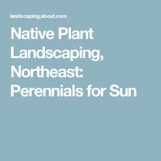 Native Plant Landscaping, Northeast: Perennials for Sun
