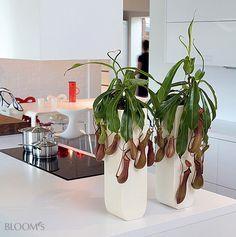 Fleischfressende Pflanzen 1