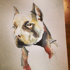 Pit bull • Watercolor • #watercolors #watercolor #art #arte #aquarela #artoftheday #instlikes #instaart #pitbull #dog #dogs #badboy #draw #drawing #sketch #moleskine #sketches #rabiscos #avenda #quadros #lcjunior