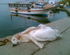 It is quite warmer in winter if you got a friend :-) #Fethiye #Turkey