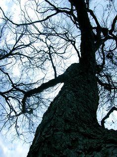Dallas Tree