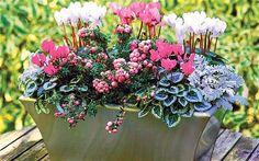 Lovely plants for winter colour.