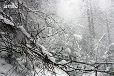 Gran nevada Nevada, Snow, Creative Photography, Author, Eyes, Let It Snow
