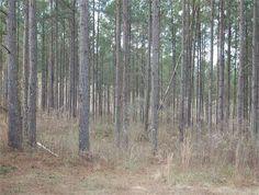 417 acres in Alabama