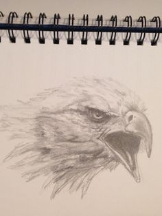 A quick little drawing of a bald eagle head.  Done from a photo courtesy PMP.