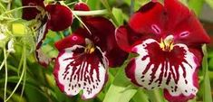 Imagini pentru toate speciile de orhidee