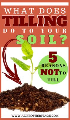 """No-till Garden: """"Forget everything you know about gardening and start over."""" 5 reasons to do a no-till garden and what tilling does to your soil."""