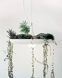 Babylon is a plantable light fixture. Made of powder coated aluminum — each Babylon is painstakingly spun into its shape by a skilled craftsman. Hanging Plants, Indoor Plants, Hanging Gardens, Hanging Succulents, Air Plants, Potted Plants, Cactus Plants, Terrariums, Deco Luminaire