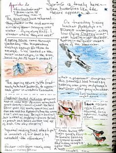Great tips for bird watching & creating your own field journal.