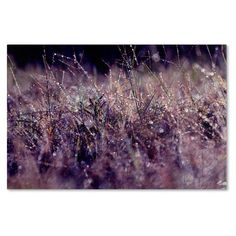 Trademark Fine Art Purple Rain Canvas Art by Beata Czyzowska Young - BC0143-C