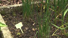 Kruidentuin Tegelen Plants, Planters, Plant, Planting
