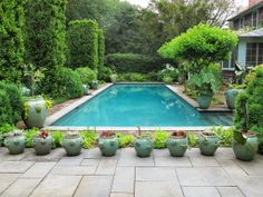The swimming pool in the back yard at Lily Pond is adorned with aqua glazed strawberry pots which are planted with many different succulents and alocasias, or elephant ears.  The tall shrubs are European hornbeam.  The smaller shrubs are boxwood.