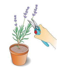 Jungpflanzen stutzen