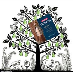 On the first day of Quinoa, my Chevron gave to me: HOW TO QUINOA in a pear tree. #12DaysofQuinoa #MIWDTD