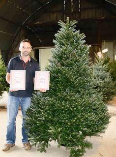 Enjoy+the+Swansea+Winter+Wonderland+of+a+Christmas+Trees