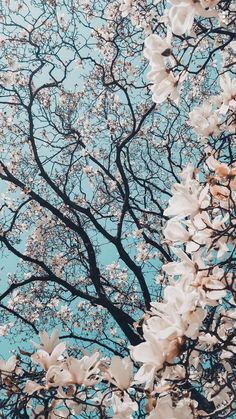 Wallpaper - Hd photo collection of the most beautiful nature ( FL my account Hạnh Lee to s. Wallpaper - Hd photo collection of the most beautiful nature ( FL my account Hạnh Lee to s. Background Flores, Flowers Background Iphone, Cherry Blossom Background, Hipster Background, Background Vintage, Blooming Trees, Blooming Flowers, Spring Flowers, Spring Plants