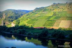 Photo of the Week: Steep Vineyards in the Mosel Valley