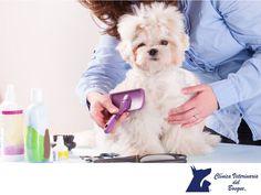 ¿Por qué se le cae el pelo a tu perro? LA MEJOR CLÍNICA VETERINARIA DE MÉXICO. Puede ser completamente normal en las mudas estacionales, sin embargo puede ser por una alimentación deficiente, alergias, el estrés y cambios hormonales. Lo importante es conocer las causas que la provocan, para controlar el problema cuanto antes. En Clínica Veterinaria del Bosque contamos con médicos especialistas para atender a tu mascota. Comunícate con nosotros al teléfono 5360-3311…