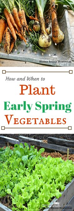 This article answers the questions When and How to plant for an Early Spring Vegetable Garden. Step by Step How to and When to plant. garden types When to Plant Early Spring Vegetables Vegetable Planting Guide, Spring Vegetable Garden, Vegetable Garden Planner, Planting Vegetables, Organic Vegetables, Growing Vegetables, Spring Garden, Companion Planting, Green Garden