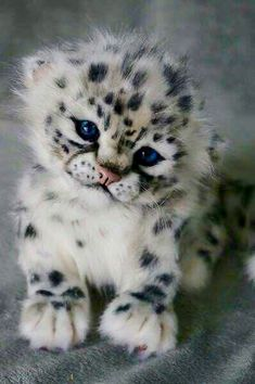 This little guy is absolutely adorable! So wish we could have one!